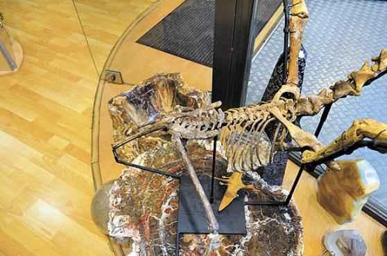 Foto postada na internet do fóssil brasileiro à venda: o dono teria comprado a peça na Alemanha, há 30 anos  (Reprodução/Internet)