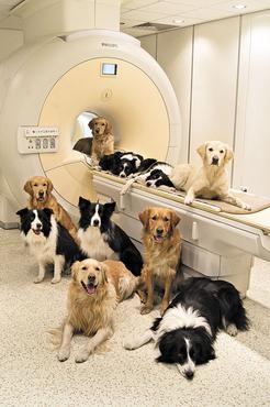 Animais que participaram da pesquisa: tщcnica nуo invasiva para  estudar o cщrebro da espщcie (Borbala Ferenczy/Divulgaчуo)