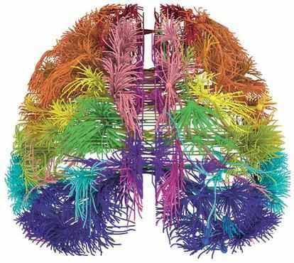 Imagem computadorizada reproduz conexões dos neurônios de um roedor: detalhamento sem precedente em dois mapas (Allen Institute for Brain Science/ Divulgação  )