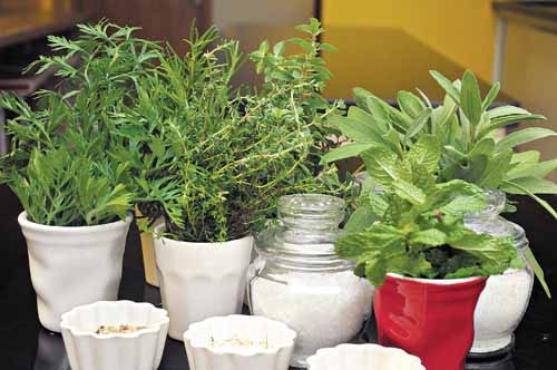 As ervas são ótimas substitutas do sal. Quem quer reduzir o consumo de sódio tem várias alternativas, como manjericão, salsinha, tomilho e alecrim (Antonio Cunha/CB/D.A Press       )