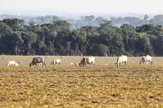 Criação de gado na fronteira com a Amazônia: a pecuária, ao lado do desmatamento, é a maior fonte de gases do efeito estufa no Brasil  (Paulo Whitaker/Reuters - 23/9/11)