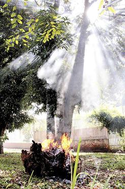 Na 707, a primeira irregularidade foi a árvore cortada; depois, o fogo (Oswaldo Reis/Esp. CB/D.A Press)