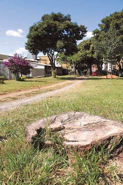 Na 703, árvore derrubada e brita para chegar aos fundos da casa (Oswaldo Reis/Esp. CB/D.A Press)