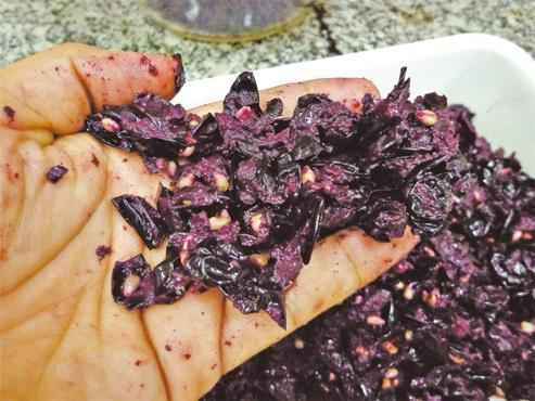 Cascas e sementes da uva-bordô: pigmentos podem servir para substituir corantes sintéticos, que muitas vezes são tóxicos