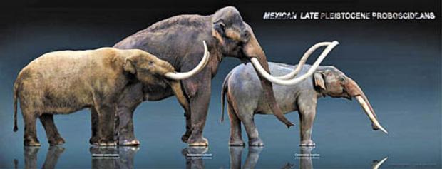 Animal parecido com elefante era alimento de caçadores-coletores