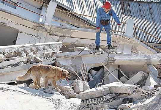 Cachorro auxilia na busca de sobreviventes do terremoto que atingiu o Haiti, em 2010: sensores v�o facilitar a��o (Tatyana Mekeyeva/Reuters - 15/1/10)