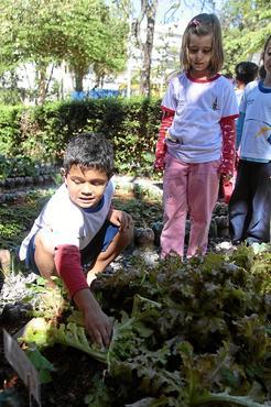 Alunos do Jardim de Infância da 304 Norte plantam, colhem e comem as hortaliças do canteiro do colégio (Ana Rayssa/Esp. CB/D.A Press)
