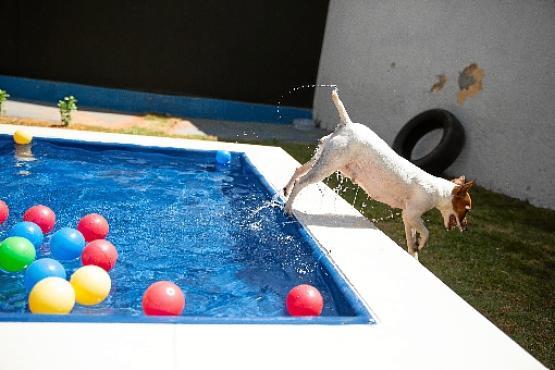 Hotel Miau Pet, no Jardim Botânico, oferece atividades esportivas, como brincadeiras na piscina e corrida, e atendimento médico para os animais (Maria Eduarda Jardim/Divulgação)