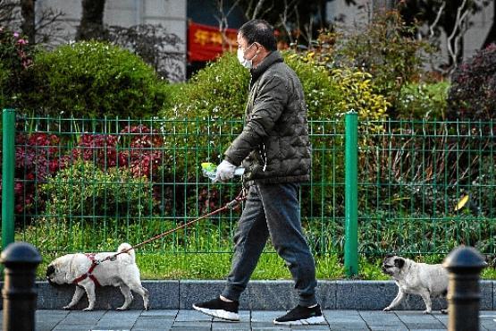 Na cidade chinesa de Wuhan, onde surgiu o novo vírus, homem passeia com cães (STR/AFP)
