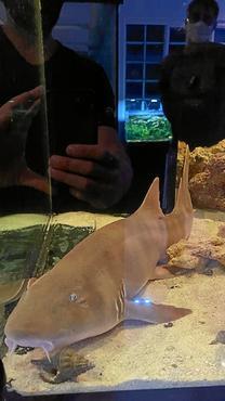 Tubarão foi encontrado em casa na Colônia Agrícola Samambaia (PCDF/Divulgação)