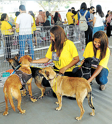 Estudantes de uma faculdade da Asa Norte organizaram ontem uma feira de animais como parte de uma disciplina. Foi um sucesso: 71 pets t�m agora um novo lar. (Antonio Cunha/CB/D.A Press)