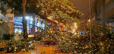 """Um temporal na noite de ontem derrubou árvores na 706 Norte. Um prédio residencial foi atingido. """"Eu estava rezando e pedindo: 'Meu Deus do céu, me proteja'. O vento foi muito forte, e eu vi que cairia"""", desabafou a aposentada Socorro Lopes, que teve o apartamento atingido. A forte chuva provocou alagamentos e falta de luz em pontos do Guará, no Setor Habitacional Lucio Costa e na Candangolândia.  (Carlos Vieira/CB/D.A Press)"""
