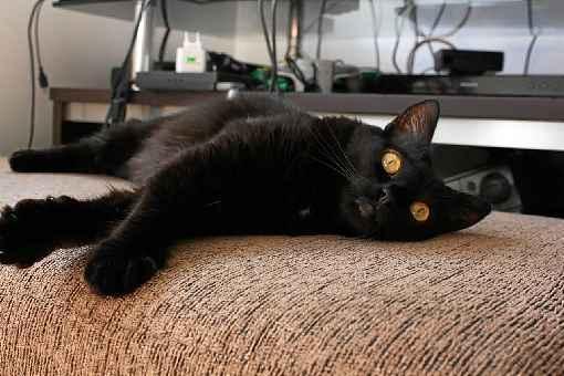 A gatinha Miau foi castrada após ser salva das ruas - (crédito: Elizabeth Oliveira/Divulgaçao )